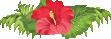 hibiscus-small
