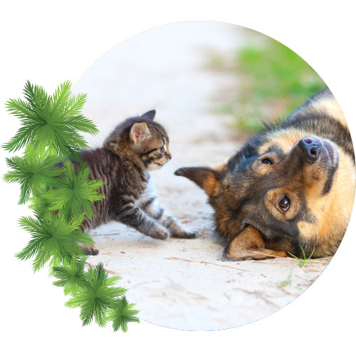 little-kitten-playing-with-big-dog-on-beach